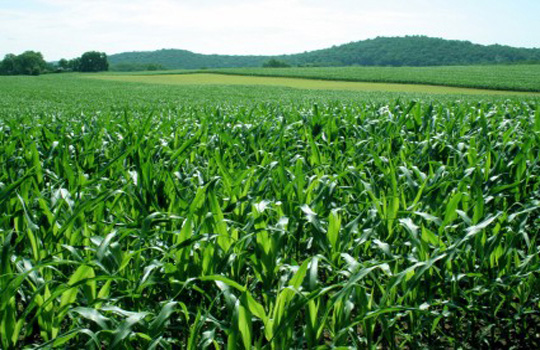Can Phosphorous Fertilizer Stay On Food